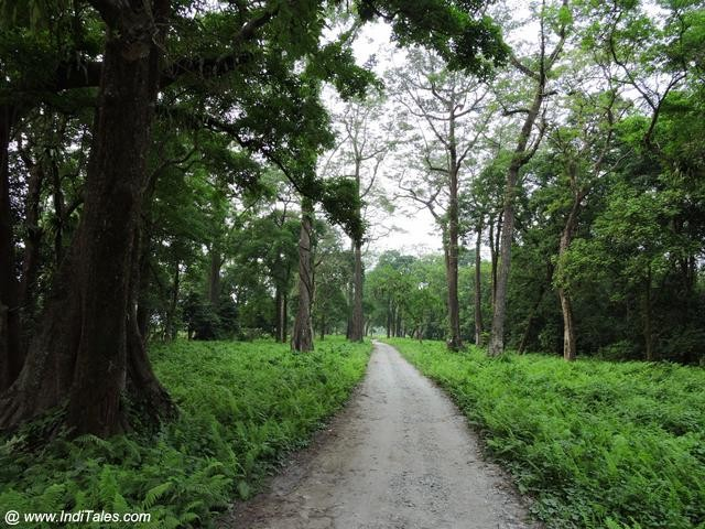 Safari Trails at Hollong, Jaldapara National Park