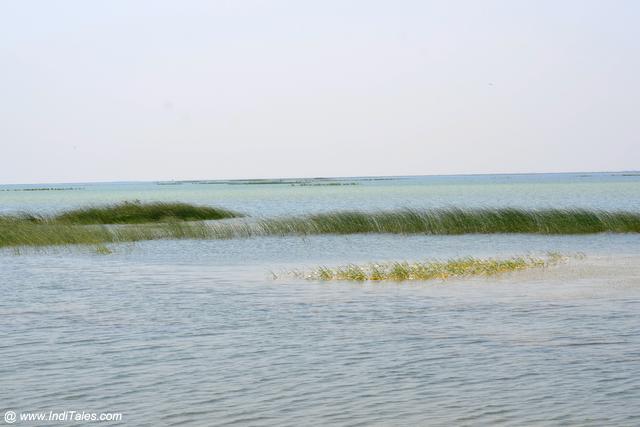 Nal Sarovar Lake, Gujarat