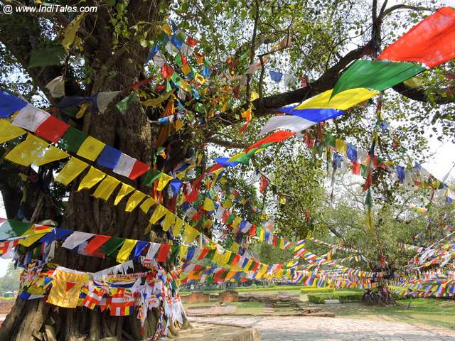 Prayer Flags - Bodhi Tree - Lumbini - Nepal