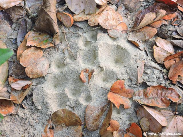 Ant Holes - Safari at Chitwan