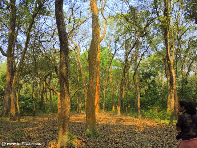 Walking through the tall trees - Safari at Chitwan