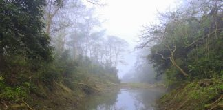 Mist lifting and revealing the forests of Chitwan National Park - Nepal