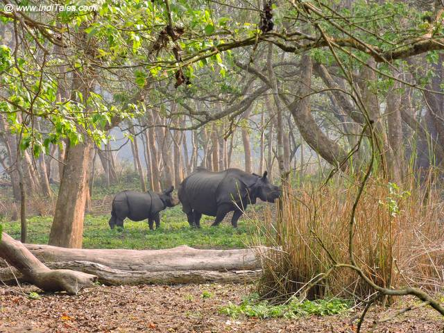 Rhino with her baby - Chitwan National Park - Nepal