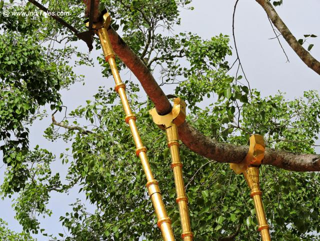 The original branch that came from Bodh Gaya