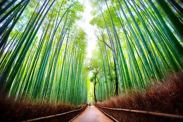 Arashiyama Bamboo Grove Kyoto Top Attractions