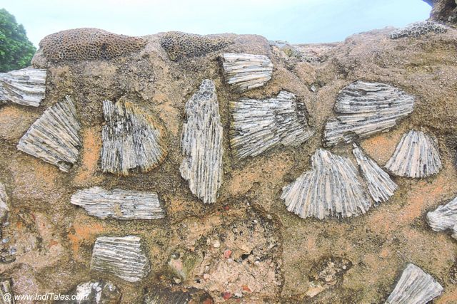 Porous Stones of Indian Ocean