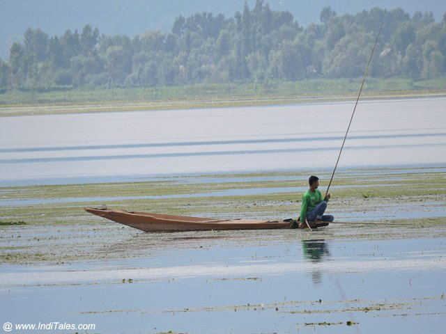 Lone Shikara on Dal Lake - Srinagar