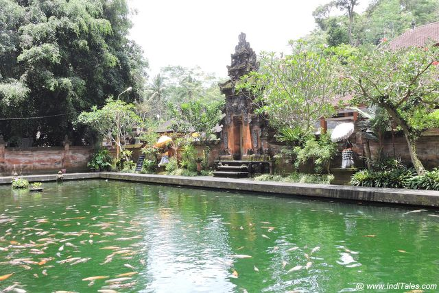 Fish Pond at Tirta Empul - Water Temples of Bali