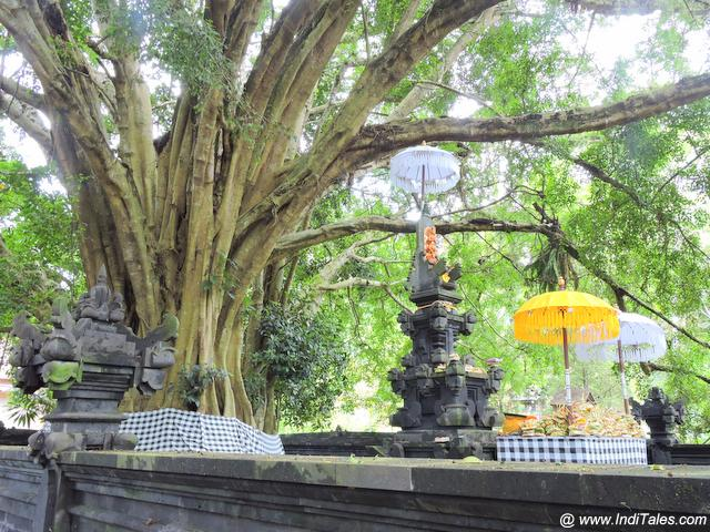Tree Shrine at Tirta Empul Temple - Bali