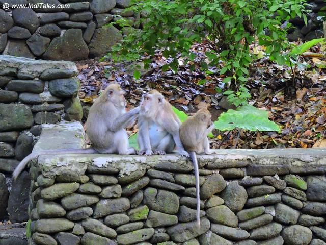 Ubud Monkey Forest - Bali