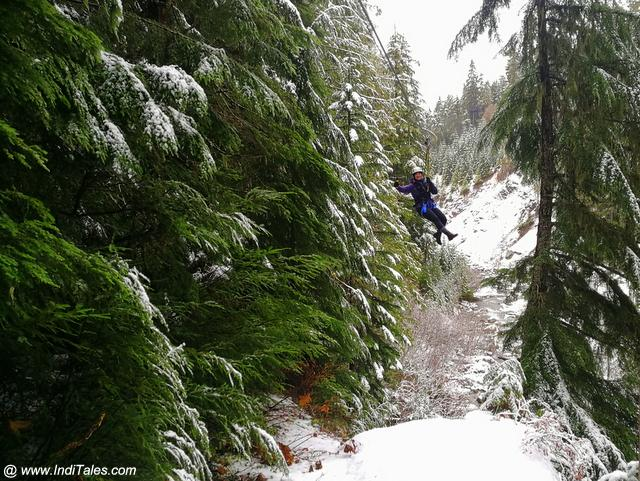 Ziplining through the tall trees of Whistler