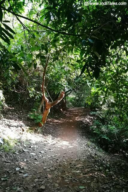 Last leg of pathway to Vibhuti Falls