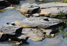 Shivalinga's carved on rocks in Shalmala river at Sahasralinga, Sirsi