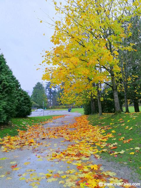Stanley Park - Fall Colors in full bloom