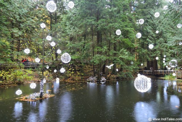 Christmas Lights in British Columbia Rainforest