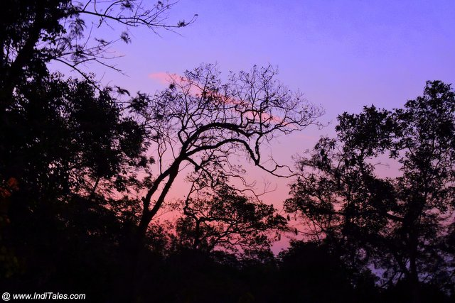 Sunset at Coffee Plantation in Coorg