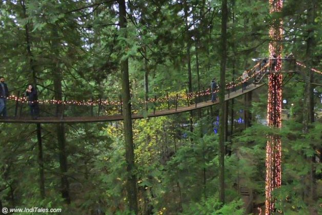 Walking on Treetops Adventure at Capilano Suspension Bridge Park - Vancouver BC