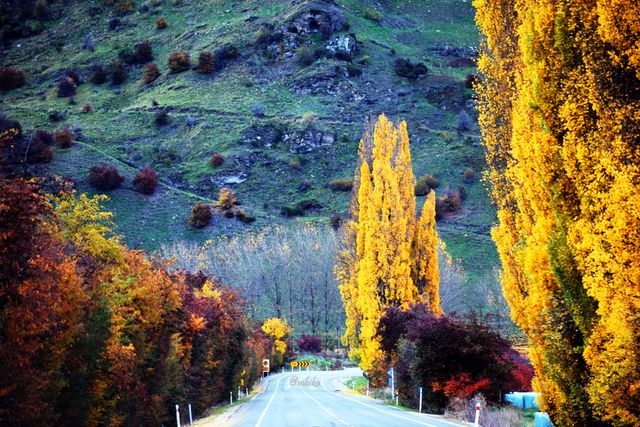 Autumn Colors of New Zealand South Island