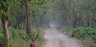 Rajaji National Park Safari Path