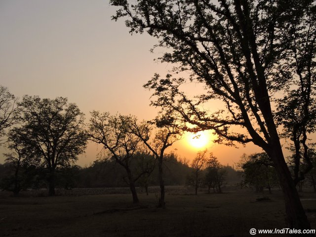 Sunset in the jungles of Chilla - Rajaji National Park