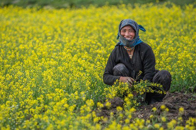 Sani Village - Padum, Zanskar