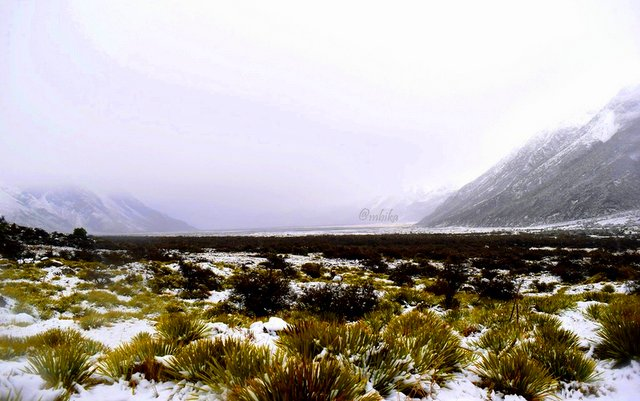 The snow blankets the entire Aoraki Mount Cook National Park