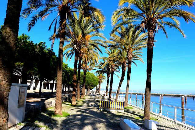 Palm Trees Lisbon