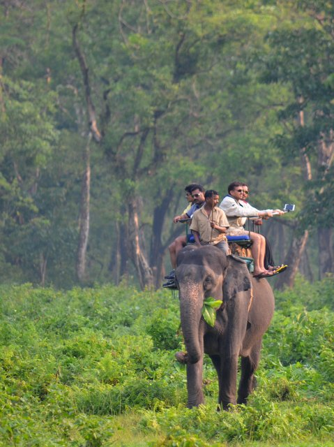 Elephant Safari at Hollong, Jaldapara National Park