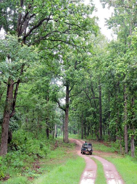 Jungle Safari at Kanha National Park