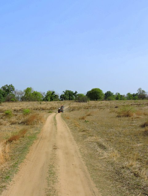 Jungle Safari at Pench