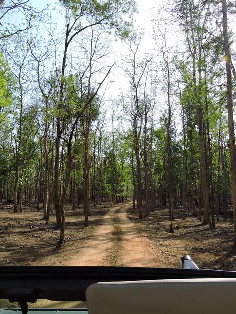 Jungle Safari, Jeep Safari at Pench National Park