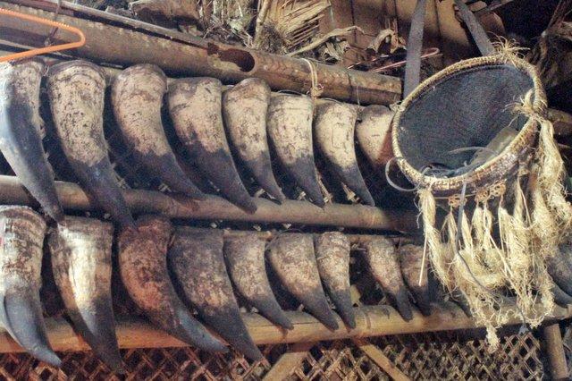 Mithun horns at Basar, Arunachal Pradesh