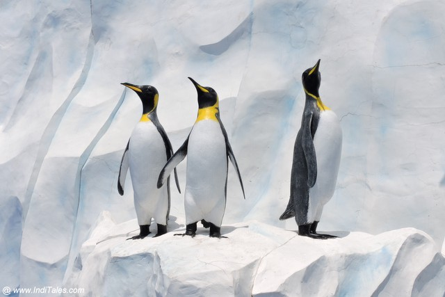 Penguins at Ocean Park - Hong Kong