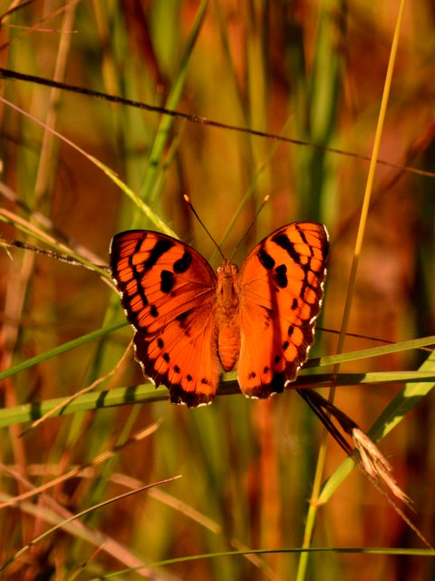Butterfly at Satpura National Park