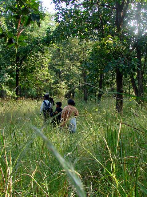 Walking Safari at the Satpura National Park buffer zone