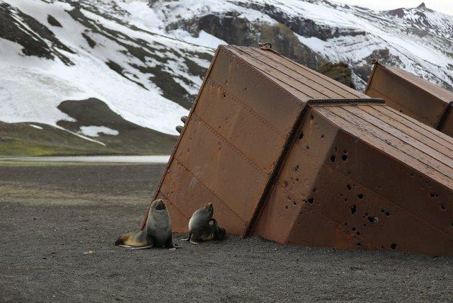 Metal Scrap at Deception Island, Antarctica