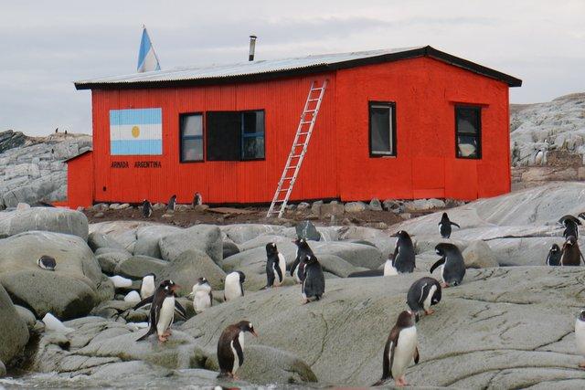 Penguins at Petermann Island Antarctica