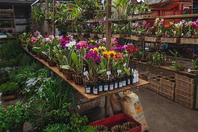 CEAGESP Flower Market - Sao Paulo