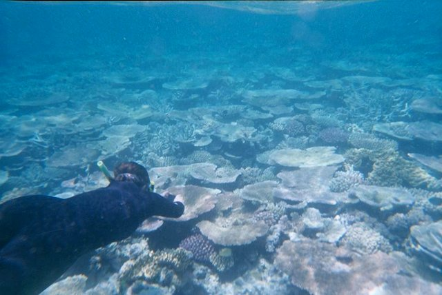 Snorkeling at Great Barrier Reef, North Queensland
