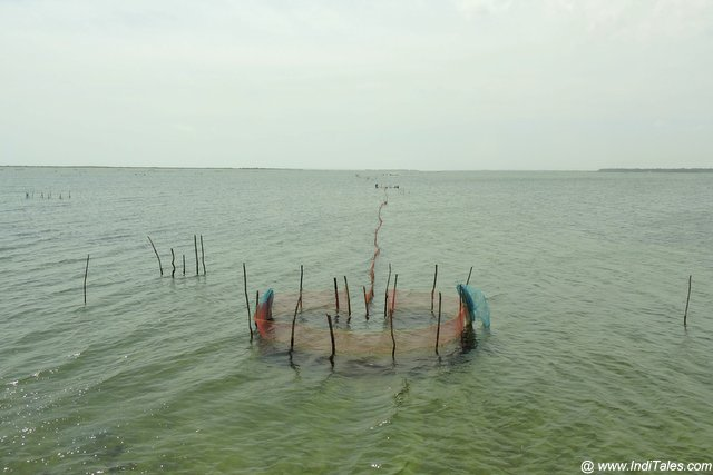 Fishing nets dotting the Jaffna waters