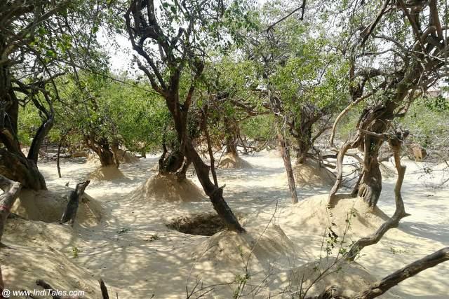 Trees at Nidhi Van