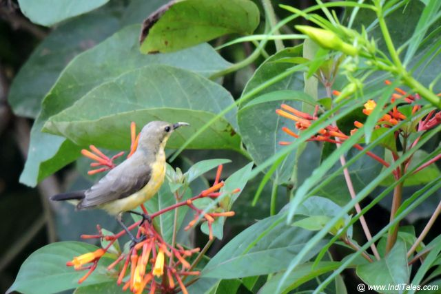 Sunbird at Westin Pushkar