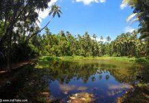 Goa Hinterlands