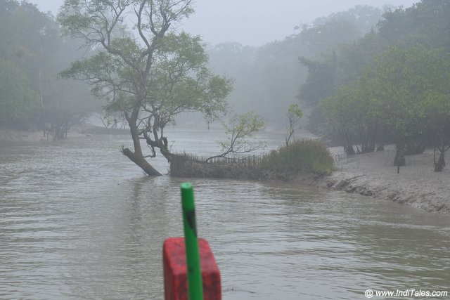 On a boat ride through the creeks of Bhitarkanika National Park