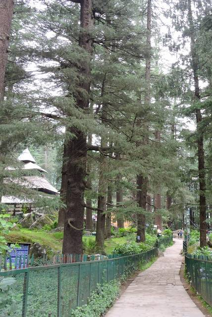 Way to Hidimba Temple in Manali