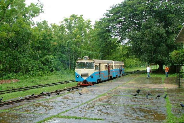 Lush green station along the meter-gauge railway line in Malnad, Karnataka