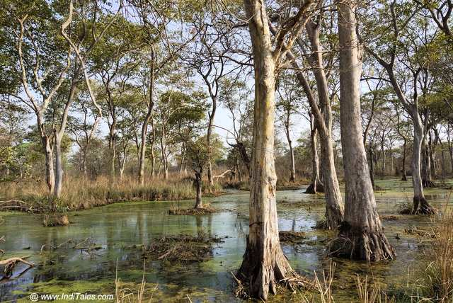 Treelined shallow waters