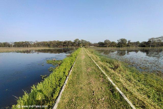 Visitors walkway at Nawabganj bird sanctuary