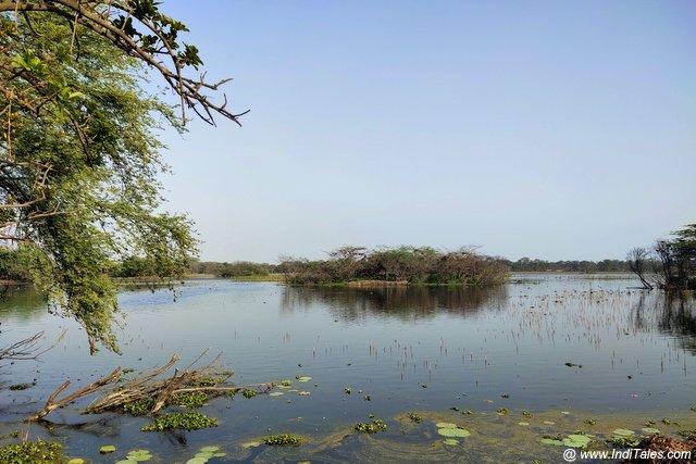 An island in the Nawabganj bird sanctuary