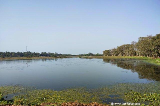 Landscape view of the wetlands of Nawabganj Bird Sanctuary